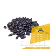 Семена подсолнечника Солтан / Насіння соняшника Солтан